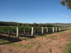 Flame Hill Kurrajong Lyra Vineyard