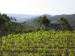 Flame Hill Vineyard Montville